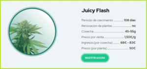 juicy-fields-gana-dinero-invirtiendo-en-cannabis-3