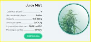 juicy-fields-gana-dinero-invirtiendo-en-cannabis-4