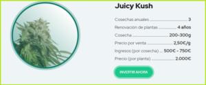juicy-fields-gana-dinero-invirtiendo-en-cannabis-5