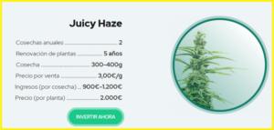 juicy-fields-gana-dinero-invirtiendo-en-cannabis-6